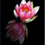 Adobe Photoshop reflection effect