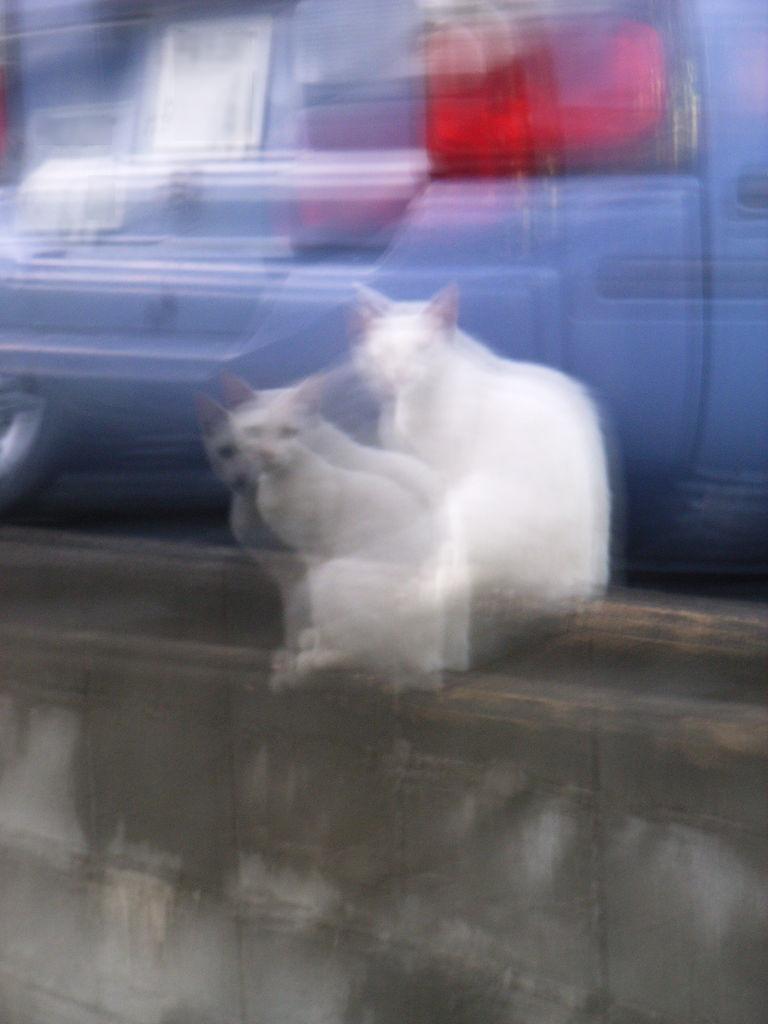 Cat camera shake
