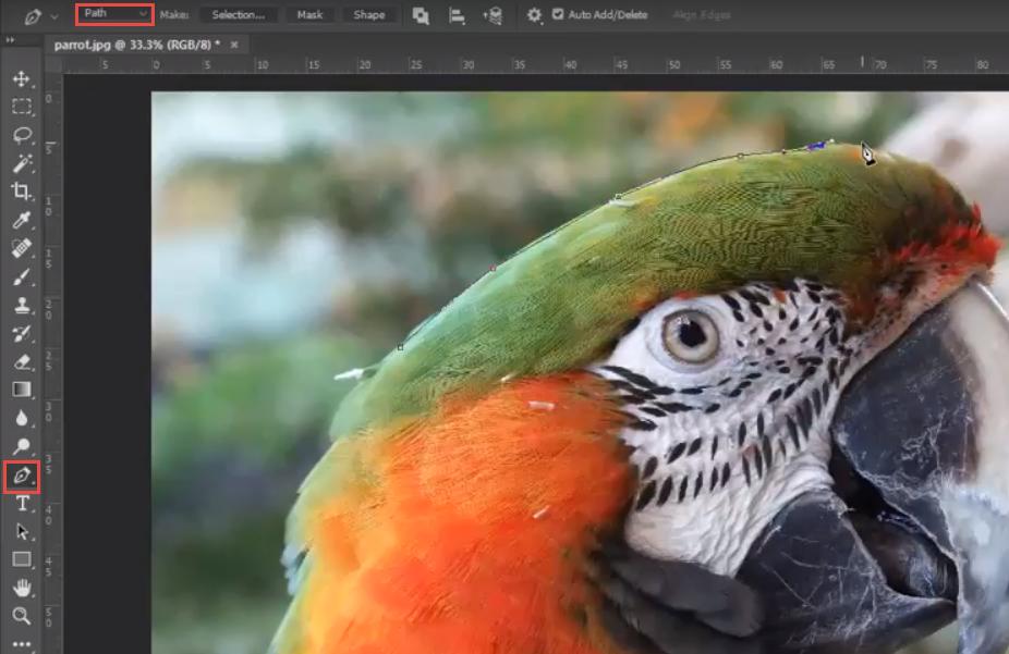 Adobe Photoshop Pen Tool