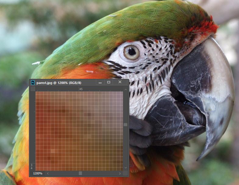 Adobe Photoshop Pixel zoom image